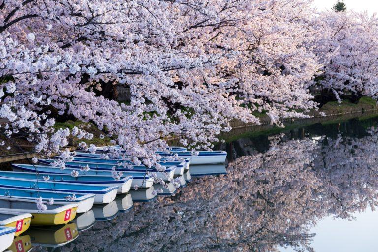 弘前桜祭り【青森県】2020年の開花日と満開時期