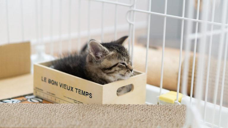 エアコンのカビは猫に影響あり?