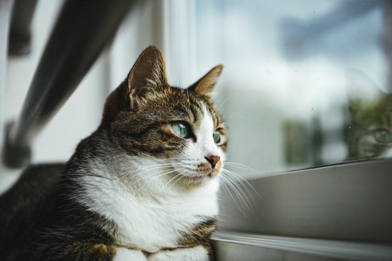 猫の【感情表現】ふみふみやモミモミしているのはどんな時